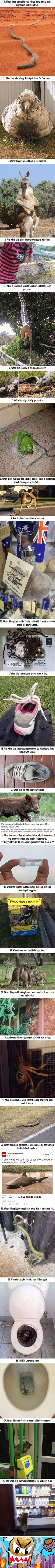 25 Times Australian Animals Just Took Things Way Too Far