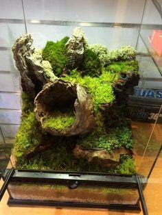 21 Best Aquascaping Design Ideas to Decor Your Aquarium - Tips Inside - homelovers Mini Terrarium, Terrariums Diy, Gecko Terrarium, Terrarium Reptile, Aquarium Terrarium, Terrarium Plants, Glass Terrarium, Gecko Vivarium, Planted Aquarium