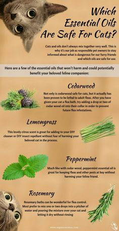 Which Essential Oils