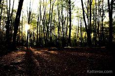 Izpiak #luz #argia #eguzkia #rayoz #izpiak #calor #otoño #autumn #udazkena #bosque #forest #natura #loves_euskadi #igerrak #euskadi #basquecountry #artikutza #behappy #bekatterox #naturaleza #nature #landscape #naturephotography #savetheplanet