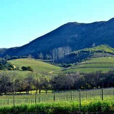 Groot Constantia--oldest winery in South Africa, Cape Town, South Africa Victoria Falls, A Perfect Day, Canada Travel, Cape Town, Vancouver, South Africa, Travel Tips, Journey, World