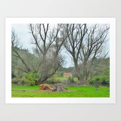 Collect your choice of gallery quality Giclée, or fine art prints custom trimmed by hand in a variety of sizes with a white border for framing. Fine Art Prints, World, Gallery, Frame, Green, Plants, Picture Frame, Roof Rack, Art Prints
