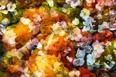 Multiple Nature 150 (Fleur) Wall, Nature, Flowers, Painting, Naturaleza, Painting Art, Walls, Paintings, Nature Illustration