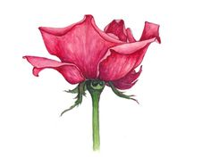 Rose Flower Drawing | Awesome Rose Drawings Rose – Symbol of Love Rose – Wallpapers and ...