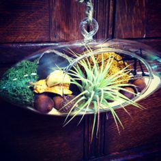 A little snail friend finds his home in this Oddyssea terrarium.