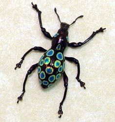 Real Rare Framed Metallic Polka Dot Weevil by REALBUTTERFLYGIFTS