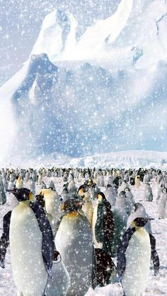 Penguins and Winter Snow