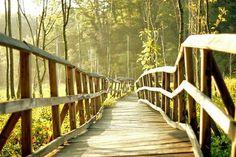 i would like to take a walk here with my boyfriend.