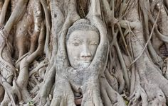 Stone Buddha head embedded in a tangle of tree roots in the ancient Siamese city of Ayutthaya, Thailand, an UNESCO World Heritage Site Bangkok, Ayutthaya Thailand, Thailand Photos, Tree Roots, Asia Travel, Thailand Travel, Wanderlust Travel, Visit Thailand, Science And Nature