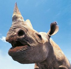 Nachricht: Südafrika | Ranger in sieben Tagen - http://ift.tt/2l9Fmgl #aktuell