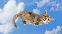 Cute Kitten in the Sky
