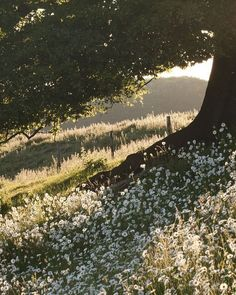 Daisies Tree and Daisies - These two images were taken when the ox-eye daisies were in bloom near Bishop Wilton.Tree and Daisies - These two images were taken when the ox-eye daisies were in bloom near Bishop Wilton. Nature Aesthetic, Spring Aesthetic, Belle Aesthetic, Aesthetic Green, Aesthetic Pastel, Flower Aesthetic, Travel Aesthetic, Aesthetic Vintage, Belle Photo