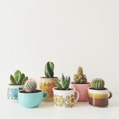Mugs and teacups full of soil and small cacti.