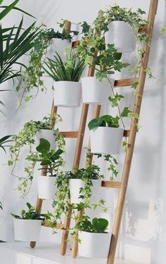Put your green fingers to use inside your home too and plant yourself a hanging garden with the SATSUMAS plant stand. Put your green fingers to use inside your home too and plant yourself a hanging garden with the SATSUMAS plant stand. Plantas Indoor, Bamboo In Pots, Bamboo Garden, Decoration Plante, Bamboo Decoration, House Plants Decor, Plant Wall Decor, Diy Plant Stand, Plant Stands