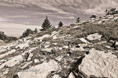LURE07 - Montagne de Lure au sommet - Alpes de Haute Provence 04