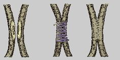 TÉCNICAS DE INJERTOS Y PORTAINJERTOS     1.-EL INJERTO   El injerto es una asociación entre dos plantas distintas, unidas de tal modo que ...
