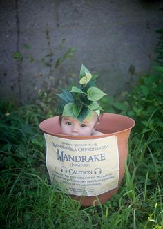 Harry Potter Baby Pictures Newborns Mandrakes