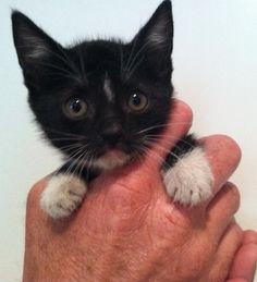 My cat Violet. Leslie, Torrance, CA. 11/7/13.