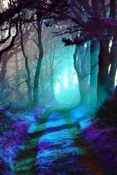 Floresta mágica.