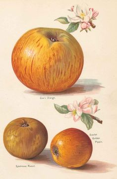 Wright,J. | The Fruit Grower's Guide. 1890