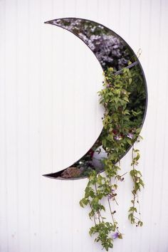 Crescent moon planter overflowing with ivy