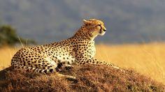 Viaje de Novios Safari Tanzania