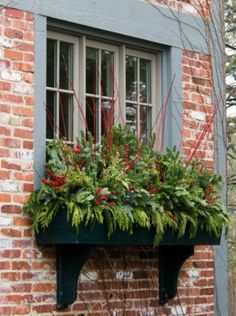 Window box decorated for Christmas. So elegant.