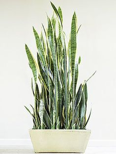 The 8 Easiest Indoor Plants to Grow - I need this!
