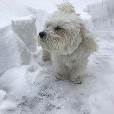 "Stephen Shore on Instagram: ""Wally braves the blizzard of '17."""