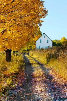 Country lane (Saint John River Valley, Fredricton, New Brunswick) cr.c.