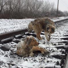 Selbst wenn ein Zug kam, ist er nicht von ihrer Seite gewichen und auf den Gleisen geblieben.