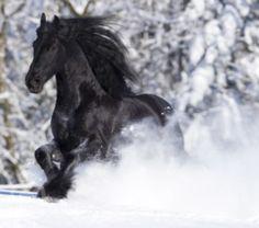 love horses love