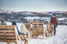 A traditional Sami experience with reindeer sledding in Tromsø. You will learn about the culture, enjoy lunch in a lavo, and feed the heard of deer. Reindeer And Sleigh, Reindeer Antlers, Pukka, Tromso, Cultural Experience, Lofoten, Catamaran, Sled, Plan Your Trip