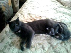 Cat & Kitten Have a Snuggle Party–Caption Contest Winners!