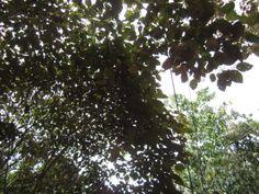 hojas brillantes