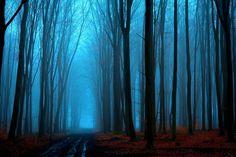 mystic forest by Mateusz Czyżewski on 500px