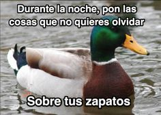 Galería: 13 Consejos del pato más inteligente del mundo que te ayudarán mucho