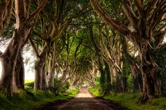 dark hedges tunnel d arbres de game of thrones 7   Dark Hedges   Le tunnel darbres de Game of Thrones   tunnel photo image GOT game of thron...