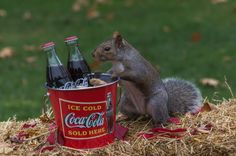 Grabbing Some Nuts and a Drink