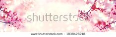 Stock Photo: Spring border or background art with pink blossom. Beautiful nature scene with blooming tree and sun flare. Easter Sunny day. Spring flowers. Beautiful Orchard Abstract blurred background. Springtime