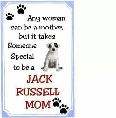 Both a Jack Russell mom and a Dobie mom.