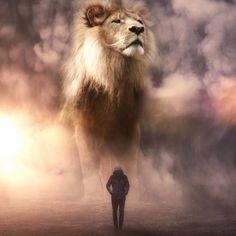 Lion Animation Wallpaper Hd For Iphone Li Pinterest Lion