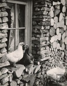 Martin Martinček - Obloženie drevenice (Wooden paneling), 1963 - 1966. Black White Photos, Black And White, Wooden Cottage, Heart Of Europe, Down On The Farm, Chickens Backyard, The Good Old Days, Animal Kingdom, Animals And Pets