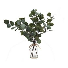 Refresh your living room with the natural look of our Silver Dollar Eucalyptus Branch in Glass Bottle. It looks like you just cut a piece from your garden! Dried Eucalyptus, Eucalyptus Branches, Tropical House Design, Tropical Decor, Tropical Furniture, Tropical Interior, Tropical Colors, Baby Shower Decorations, Tree Decorations