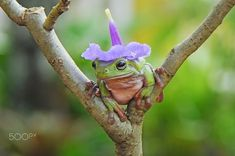 Cute Little Animals, Cute Funny Animals, Baby Animals, Sapo Frog, Pet Frogs, Frog Art, Frog And Toad, Oui Oui, Animal Pictures