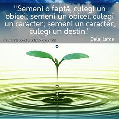 Poze cu citate care îți vor oferi inspirație și te vor motiva. – Citate Impresionante Good Motivation, Dalai Lama, Positive Thoughts, Love Life, Motivational Quotes, Mindfulness, Spirit, Herbs, Positivity