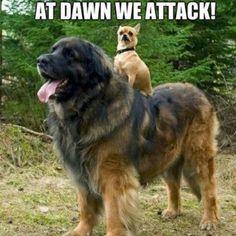 At Dawn...we ATTACK!