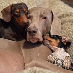 sleepy Indiana, Harlow, Reese