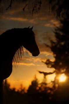 of the pictures - - Horse -Language of the pictures - - Horse - As Cosy As Can Be Best Buddies by David R. Stoecklein Under a Blood Red Sky Most Beautiful Horses, All The Pretty Horses, Animals Beautiful, Cute Animals, Cute Horses, Horse Love, Horse Photos, Horse Pictures, Foto Cowgirl