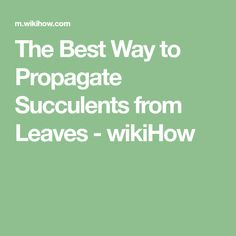 The Best Way to Propagate Succulents from Leaves - wikiHow